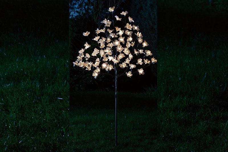 1.5M Magnolia tree